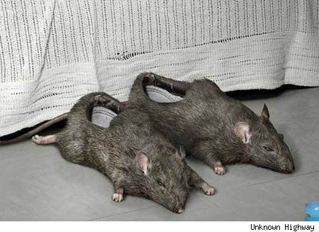 Step 1: catch two rats.  Step 2: hollow out rats.  Step 3: wear rats as shoes.