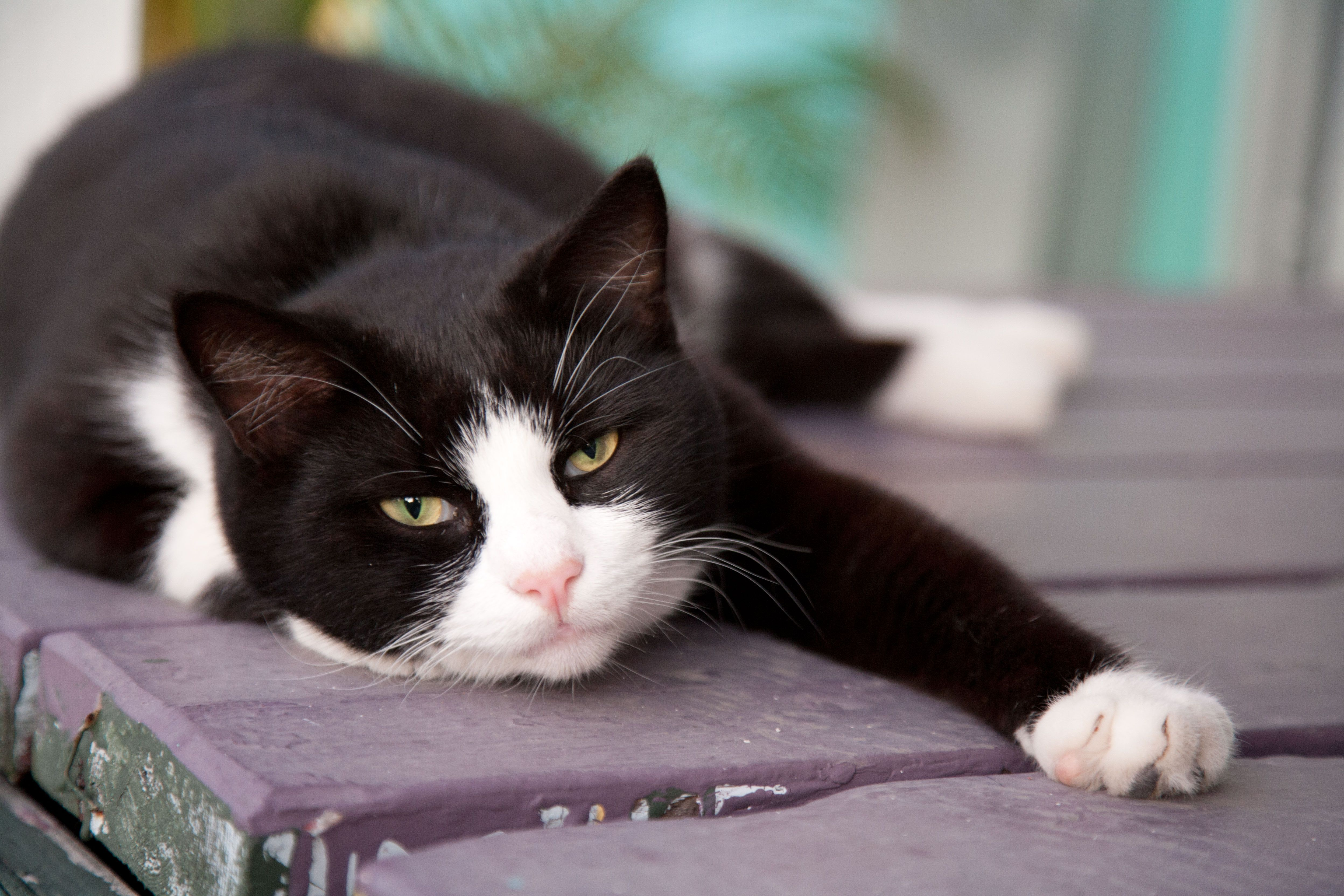 25 Names For Southern Cats Cats Cat Purr Black And White Kittens