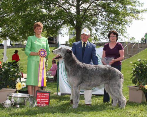 Home - Irish Wolfhound Club of America, Inc.   Irish ...