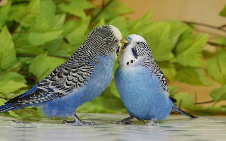 Pin On Bird Photography