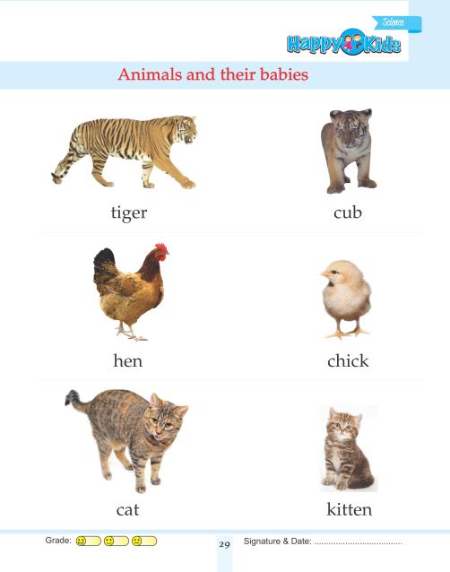 Kindergarten Science Animals And Their Babies http