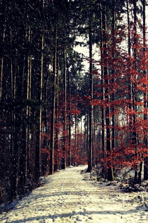 Winter Sun | Flavio Sarescia