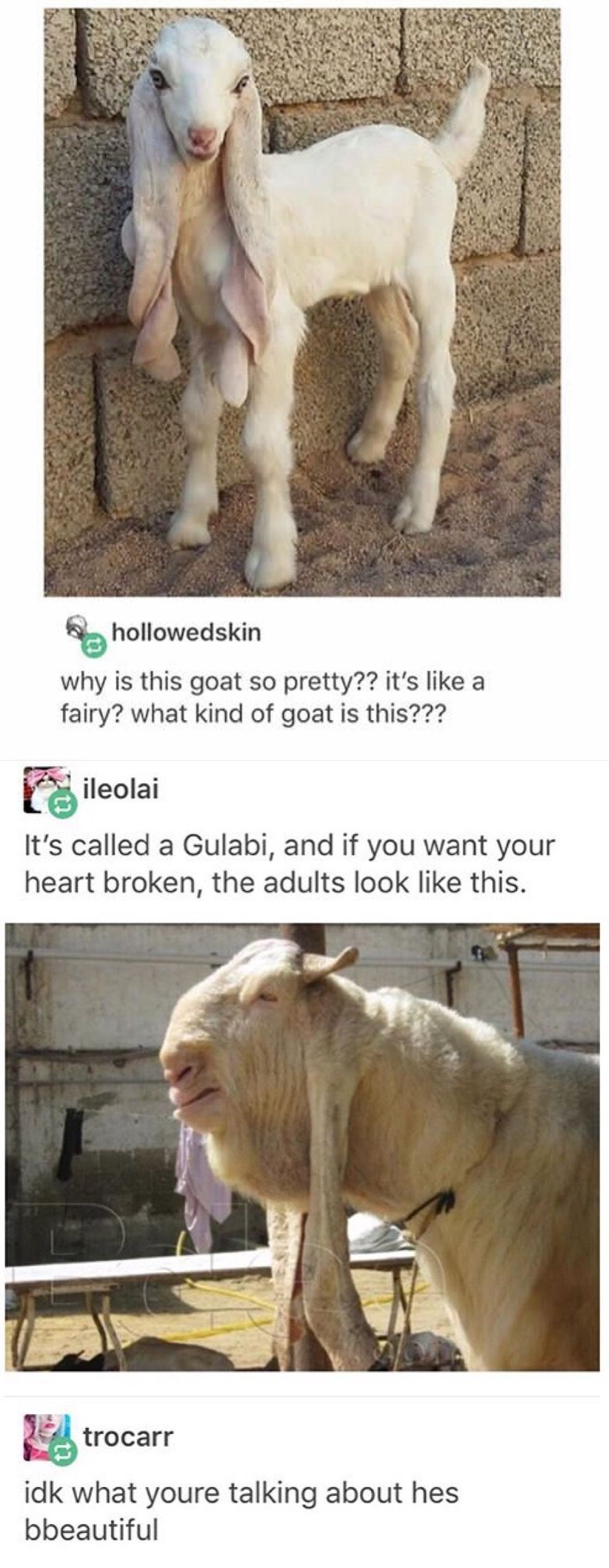 Pin By Georgia Green On Tumblr Funny Funny Animals Funny Cute Animal Memes