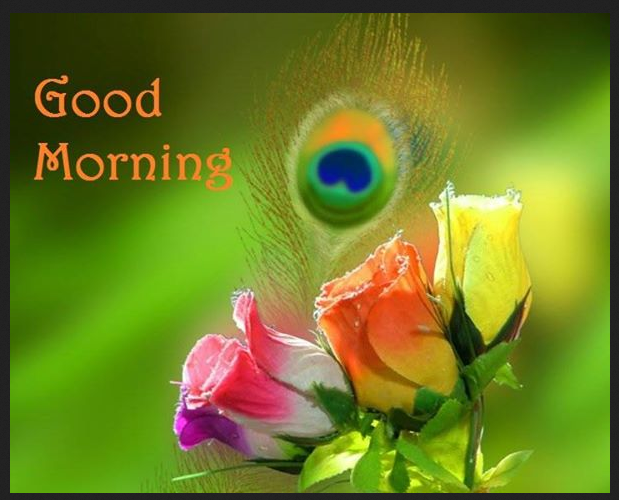 Good Morning Wallpaper Free Download Good Night Morning Wishes