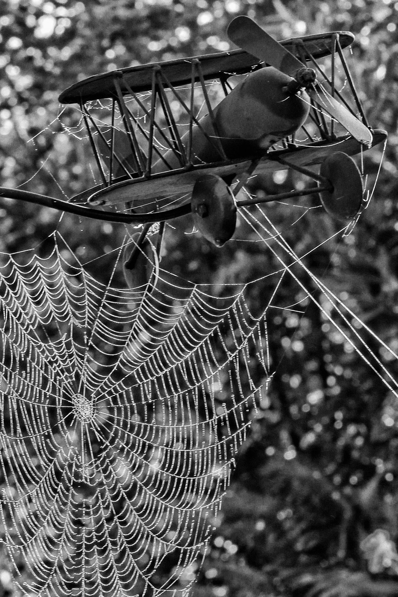 Die Alten Weiber Fangen Schon An Zu Spinnen Weibchen
