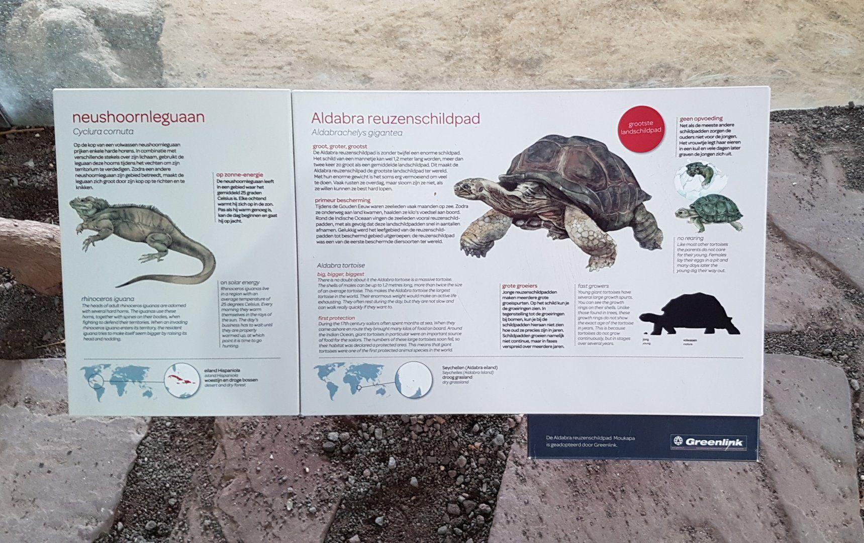 Iguana - Tortoise Sign | ZooChat | Australia | Tortoise, Signs
