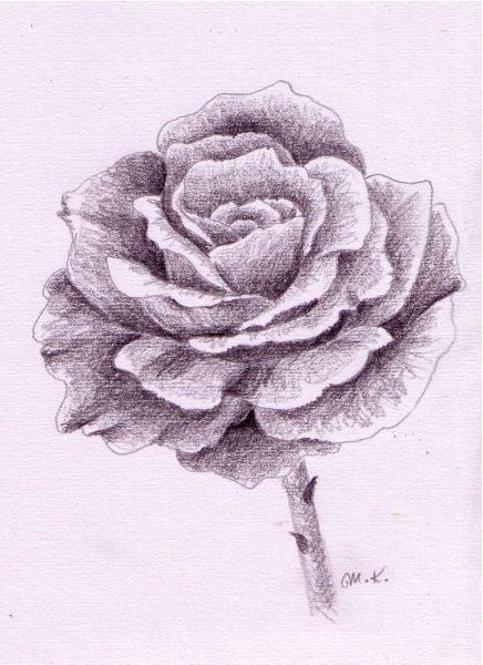 Rose Zeichnen Schritt Für Schritt Blumen Zeichnen