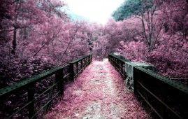 Sakura Garden HD Wallpaper