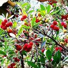 2 x Erdbeerbaum Arbutus unedo winterhart 123365 Garten & Terrasse #kletterpflanzenwinterhart