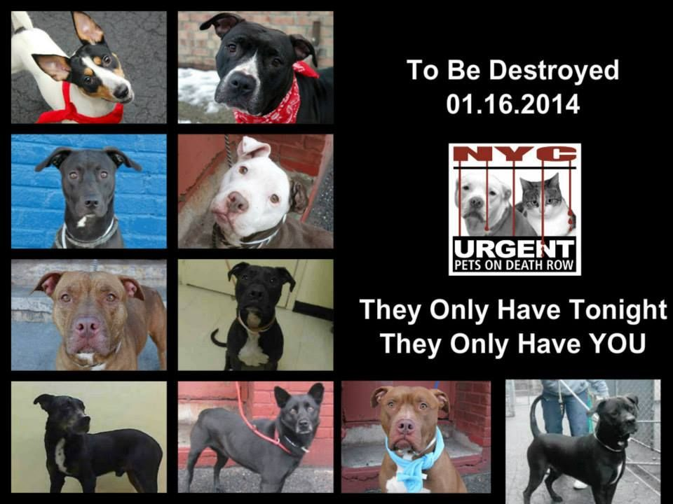 TO BE DESTROYED 01/15/14! PLEASE TAKE A MOMENT AND DO