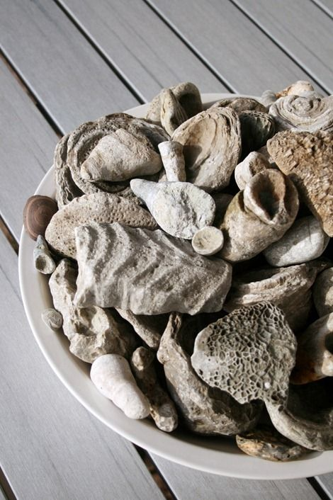 Fossils -- everyone needs a bowl of fossils sometime in their life...