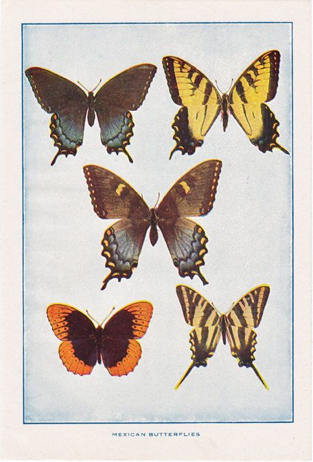 butterfly print from the 1920's, this is a good source for vintage illustrations and paper ephemera