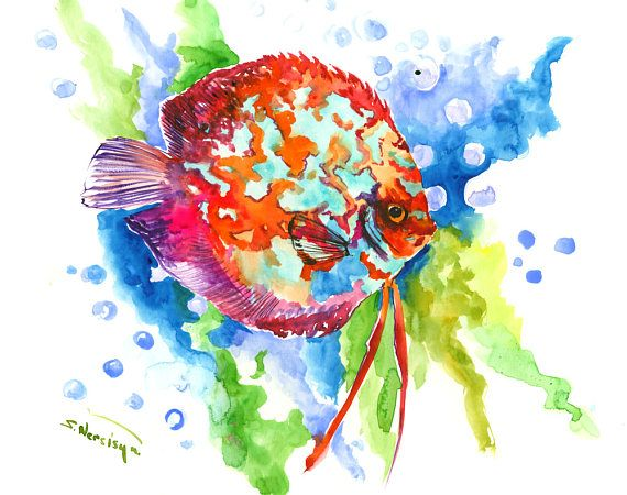 Discus Original Watercolor Painting Rainbow Colors Red Blue