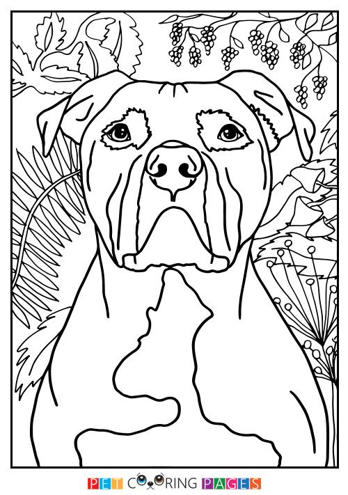 American Pit Bull Terrier Coloring Page | Color me Happy | Pinterest ...