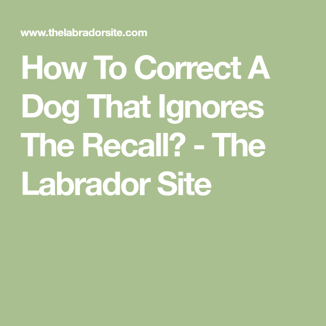 How To Correct A Dog That Ignores The Recall Recall Ignore Dog Remedies