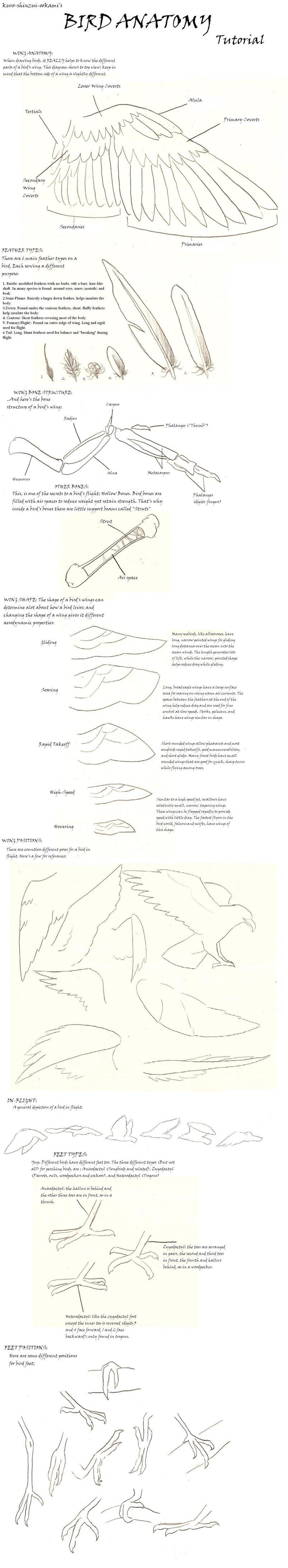 Bird Anatomy Tutorial by Anima-Lux-Artifex on DeviantArt | drawing ...