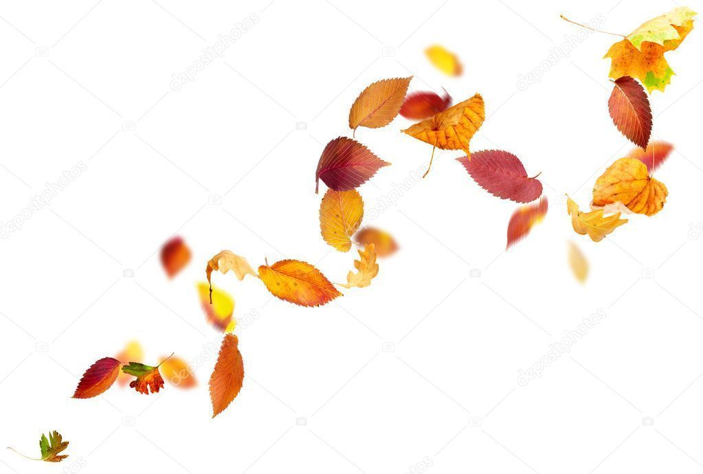 Falling and Spinning Autumn Leaves - Stock Photo , #Affiliate, #Autumn, #Spinning, #Falling, #Photo #AD #autumnleavesfalling Falling and Spinning Autumn Leaves - Stock Photo , #Affiliate, #Autumn, #Spinning, #Falling, #Photo #AD #autumnleavesfalling Falling and Spinning Autumn Leaves - Stock Photo , #Affiliate, #Autumn, #Spinning, #Falling, #Photo #AD #autumnleavesfalling Falling and Spinning Autumn Leaves - Stock Photo , #Affiliate, #Autumn, #Spinning, #Falling, #Photo #AD #autumnleavesfalling