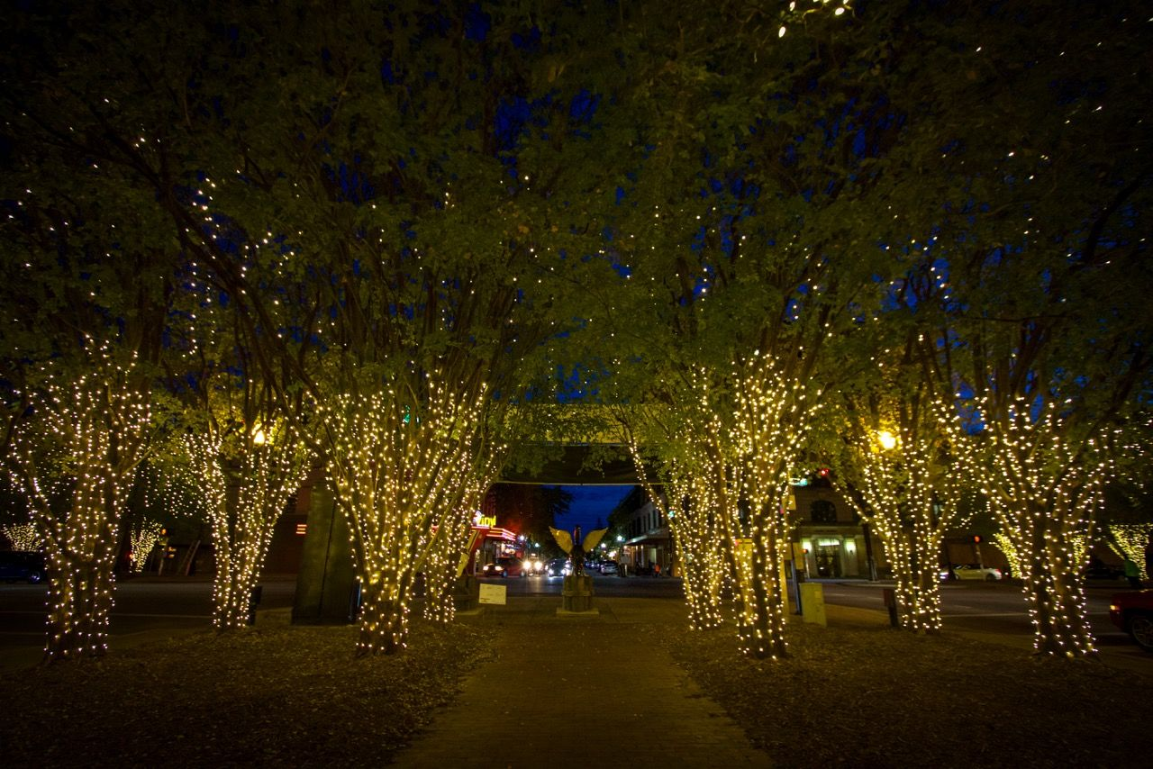 Image result for wrapping crepe myrtle christmas lights