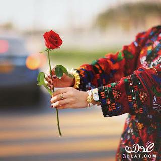 Pin On صور ورود اجمل صور زهور ورد رائعة