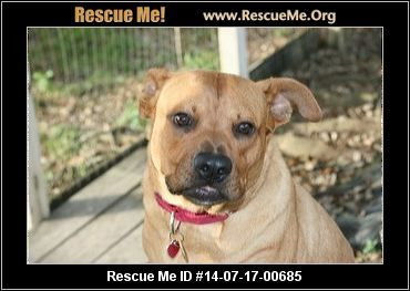 Florida Boxer Rescue Adoptions Rescueme Org Wanda Female Boxer Mix Age Puppy Good With Most Dogs Good With Kids A Boxer Rescue Post Animal Animals