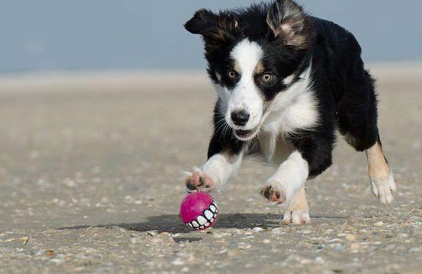 Odeur de chien dans la maison, comment lu0027enlever? Collie, Dog and
