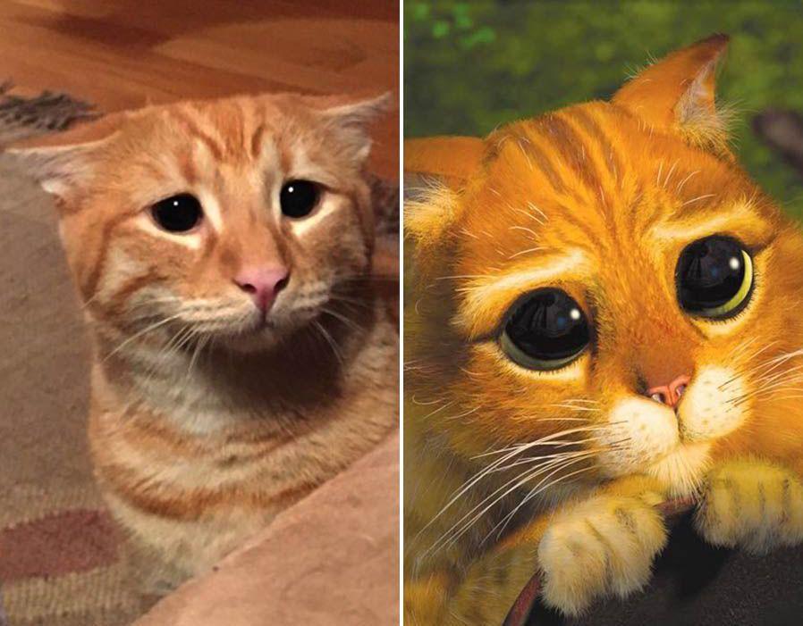 Animals that look like cartoons | cat reference | Cartoon ... Sad Animal Face