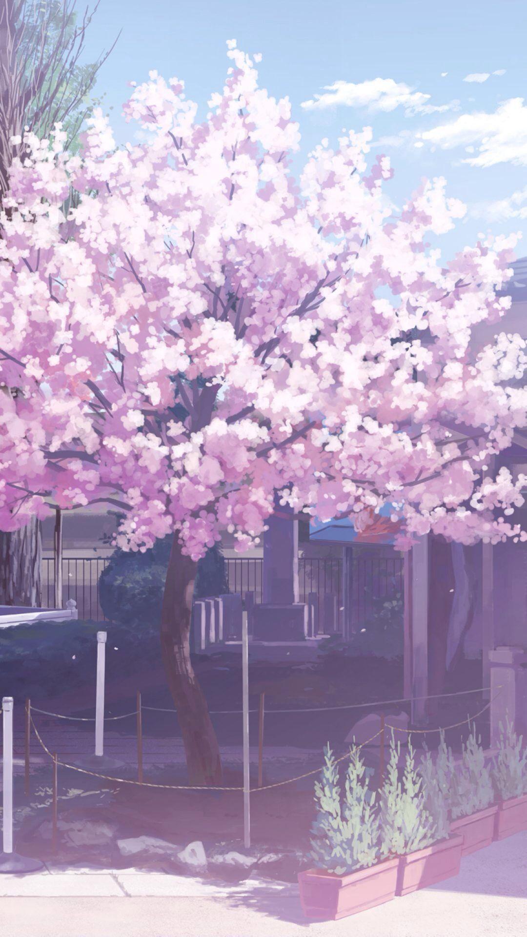 Anime Aesthetic Sakura Flower Wallpaper