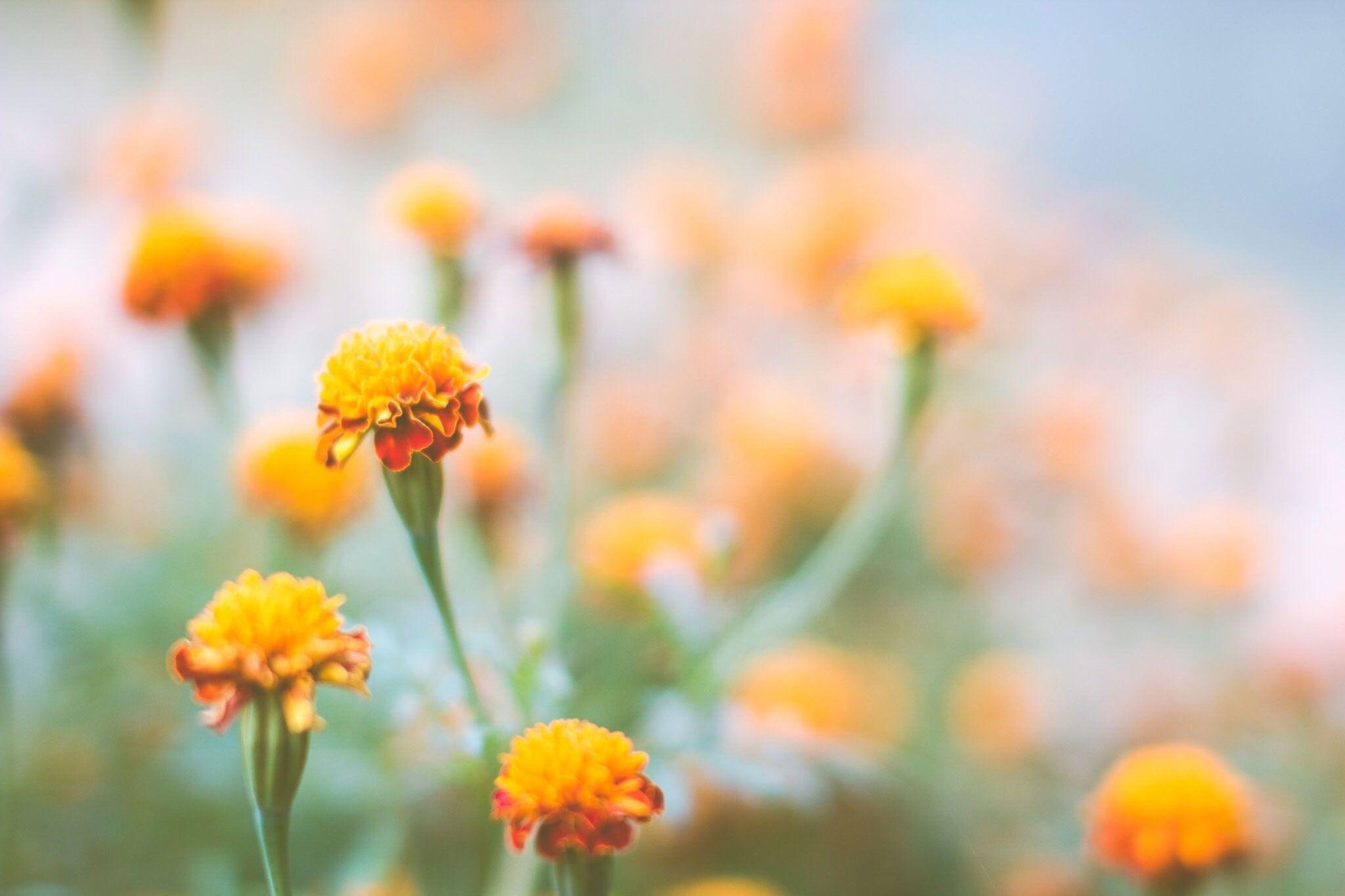 Great Plant Sources For Natural Fabric Dye Garden Soil Plants Autumn Flowering Plants