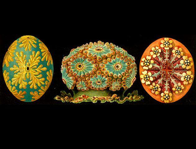Ernst Haeckel . The Wiki Nature | Design Catwalk | Morethanlove