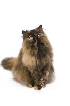 "Royal Canin Cat Pinterest Contest"" on Pinterest"