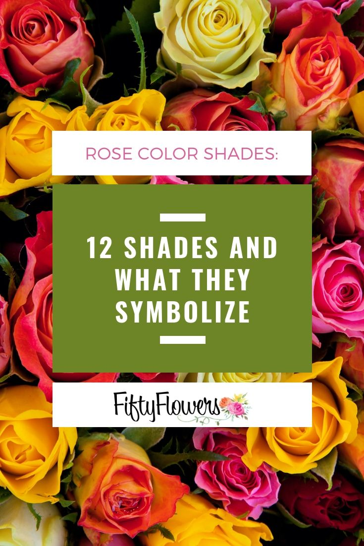 Rose Color Meanings: 12 Shades and What They Symbolize ...