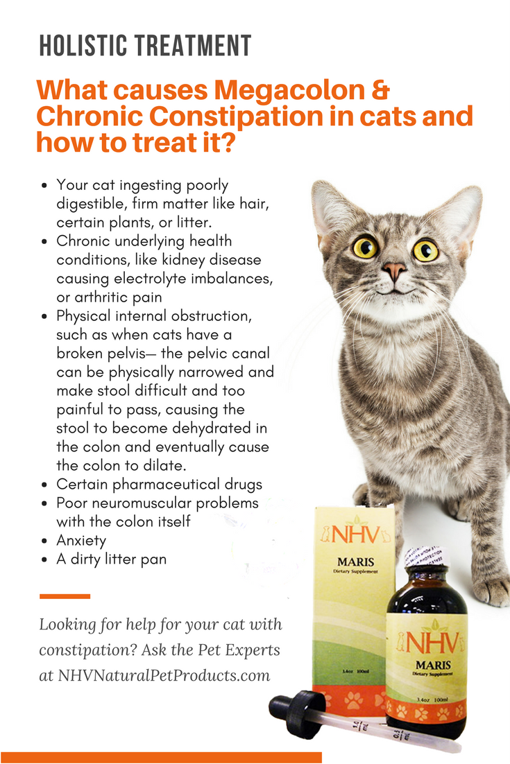 Pin On Keeping Your Cat Healthy