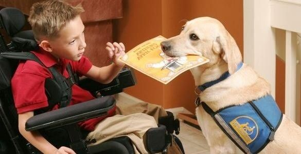 Kids And Service Dogs Google Search Assistance Dog Therapy