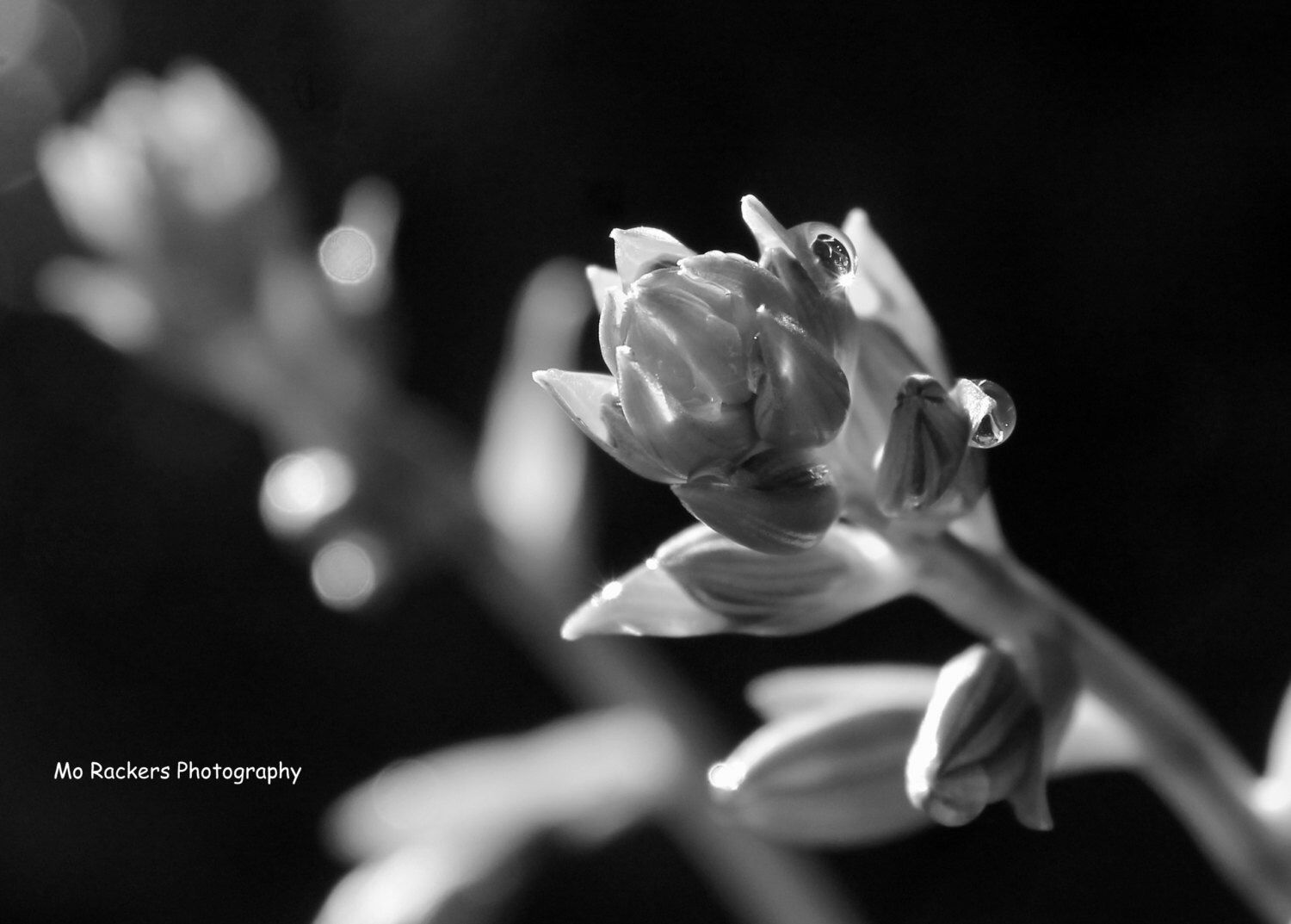 Landscape Photography Black And White Floral Photography Waterdrop