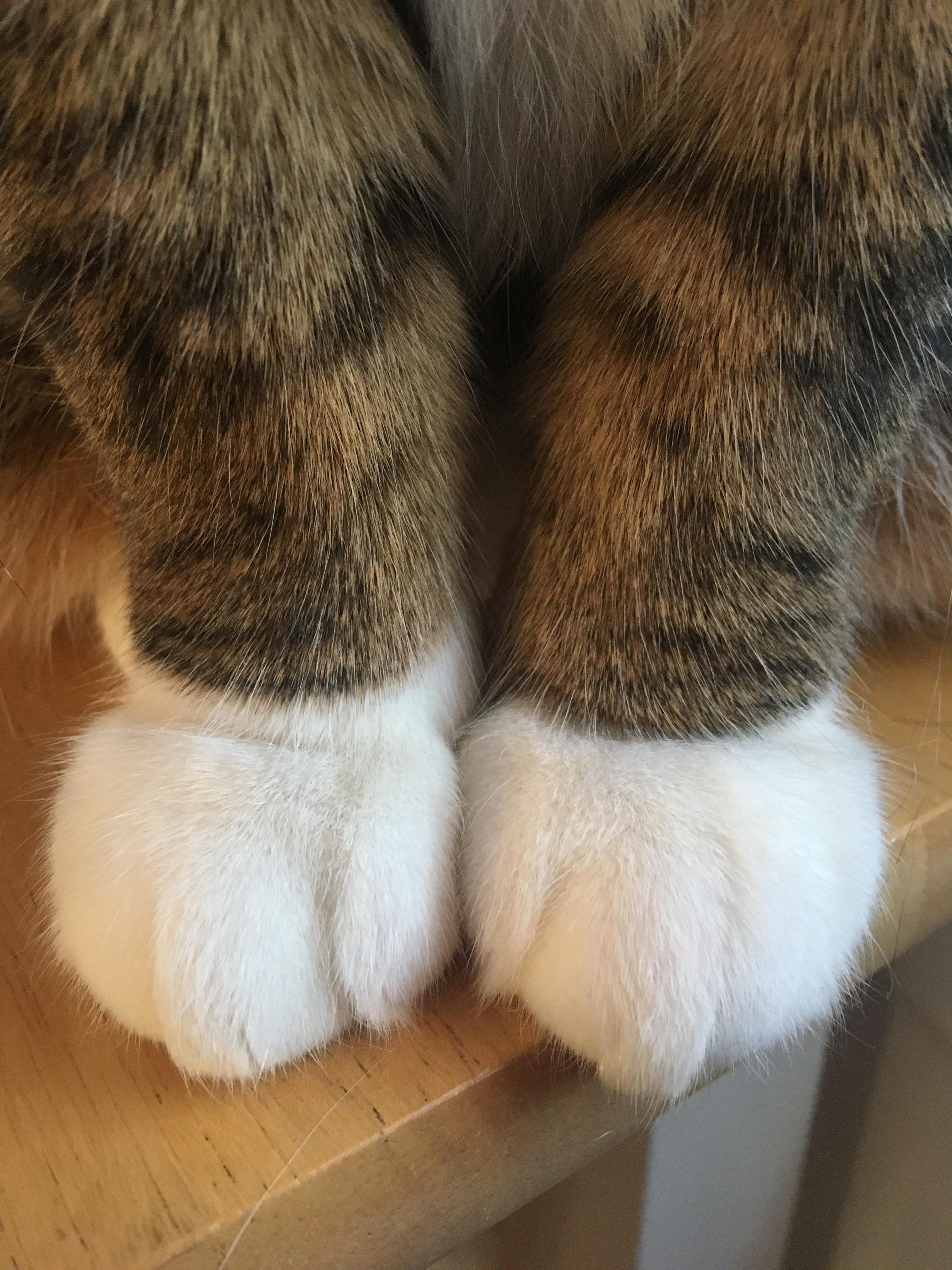 A couple of fuzzy paws to start the weekhttpsifttt
