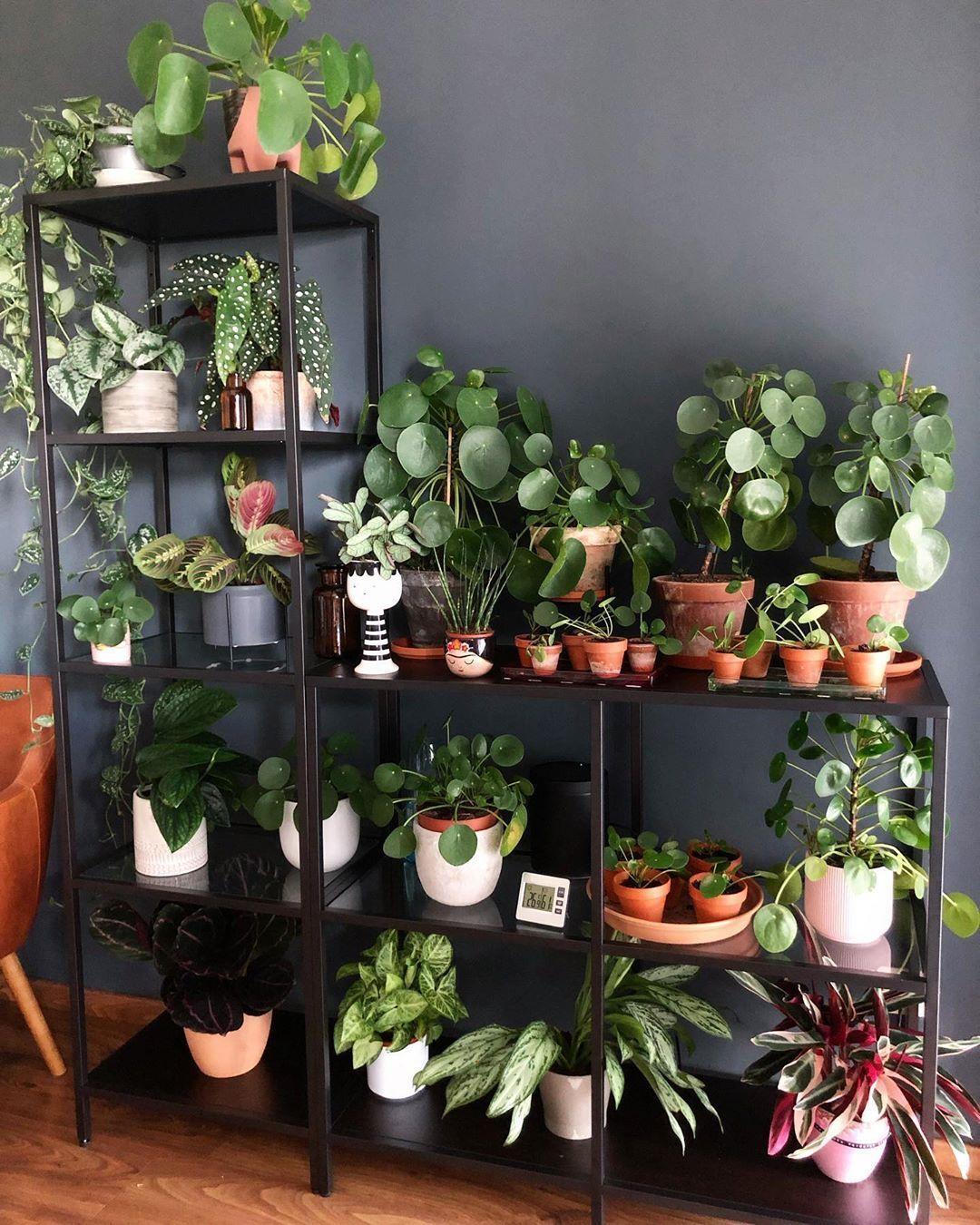 Pin On Big House Plants