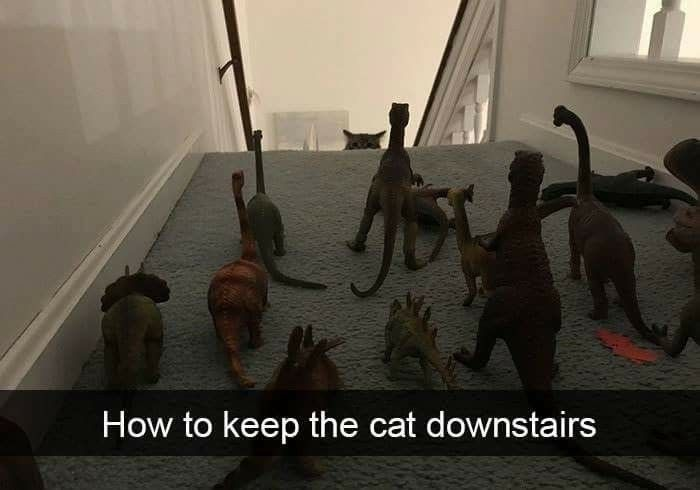 Pin by tim seats on animalsinsects Funny cat pictures