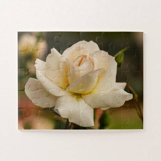 Puzzle de una preciosa rosa blanca en el jardin