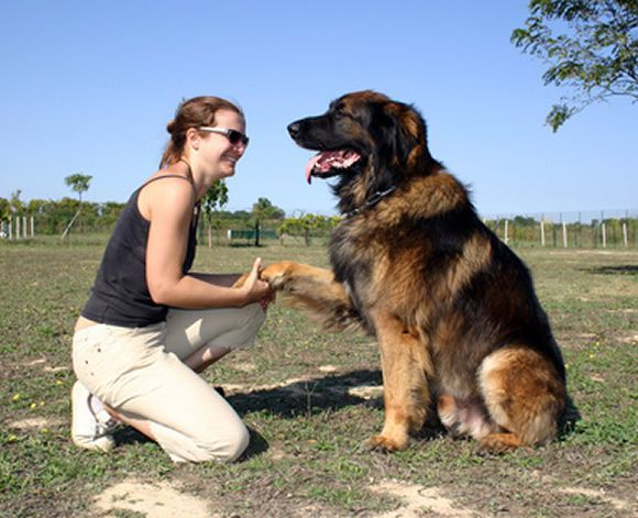 Dog Training Washington Dc We Offer Basic And Advanced