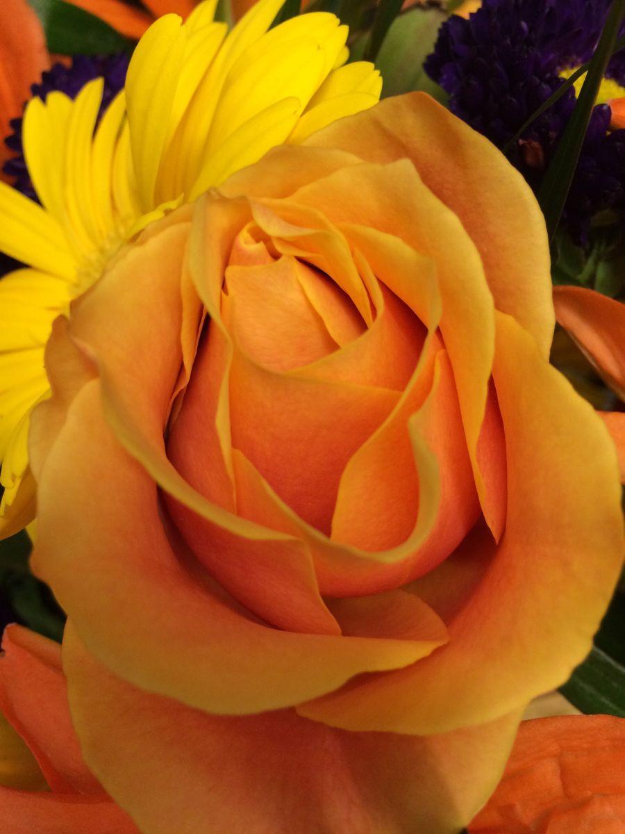 Some #yellowroselove flowerlove #nature beautiful #yellowrose #explore_floral_ #flowerstalking #igscflowers #splendid_flowers #ig_monumentalworld_flowers #ig_naturelovers #flowers_moody #petal_perfection #quintaflower #absolutelyflora #captures_flowers #ig_exquisite