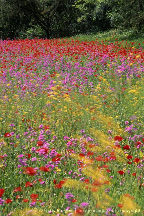 Colorful Wildflowers ...
