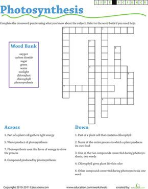 Life Science Crossword: Photosynthesis | Photosynthesis, Life ...