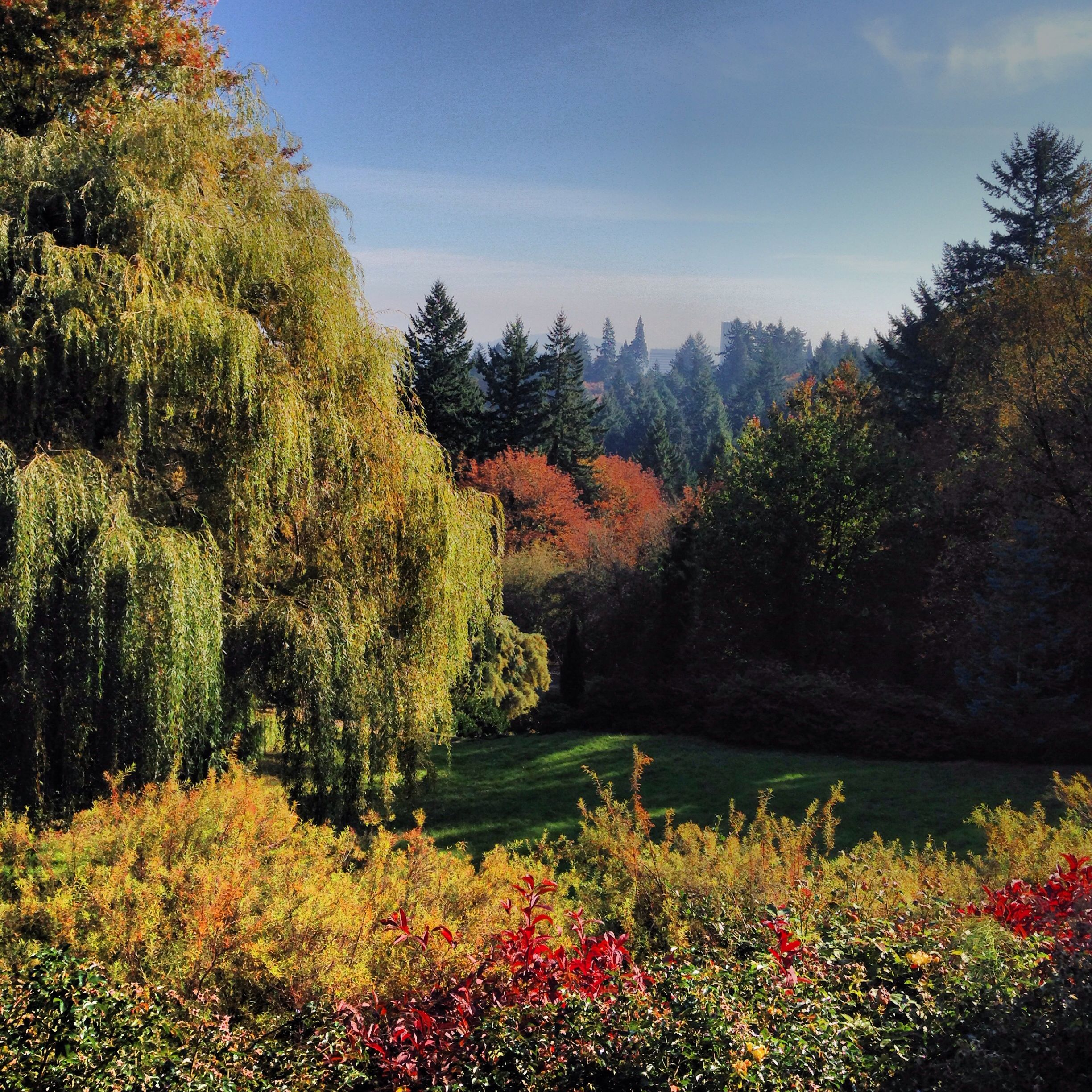 Beautiful Places In Portland Oregon: View From The Portland Test Rose Garden.