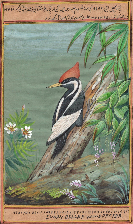 Artnindia bird drawings art prints art