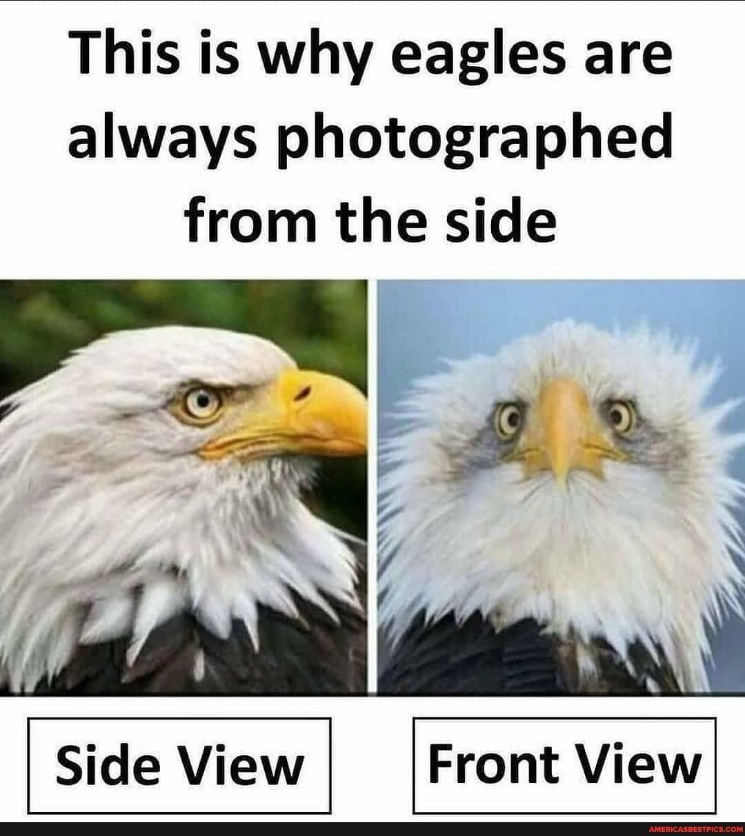 This is why eagles are always photographed from the side - America's best pics and videos