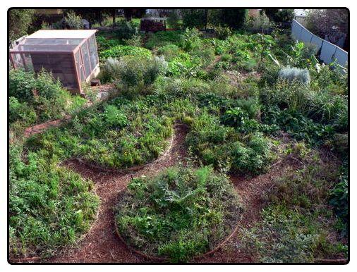 Pin by Barbara Faraone on Garden Pinterest Garden, Vegetable