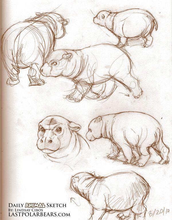 Pygmy Hippo - Lindsay Cibos http://www.lastpolarbears.com/tag/daily/page/3/