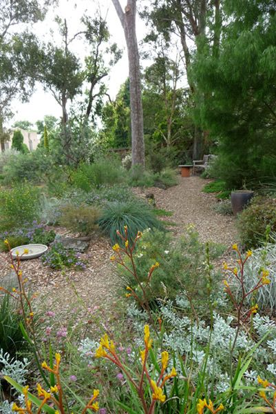 Path And Long Garden Bed With Angophera Sloped Garden