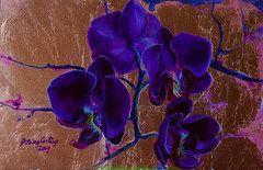 Dorina  Costras - Orchid