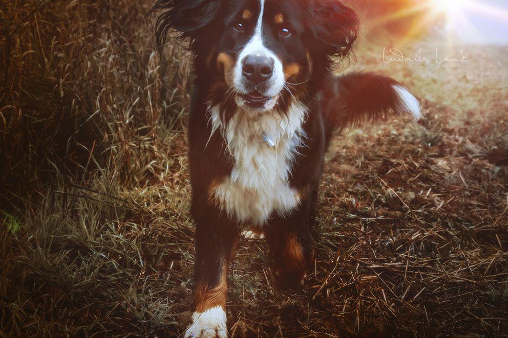 3 Klasse Tipps Damit Dein Hund Draussen Auf Dich Achtet Hunde